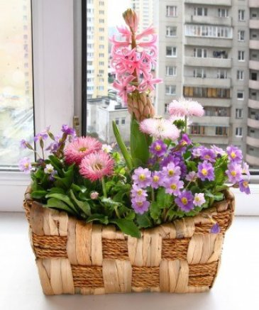 13865186-decoration-of-balcony-hyacinths-bellis-and-primrose-spring-flowers-on-a-balcony